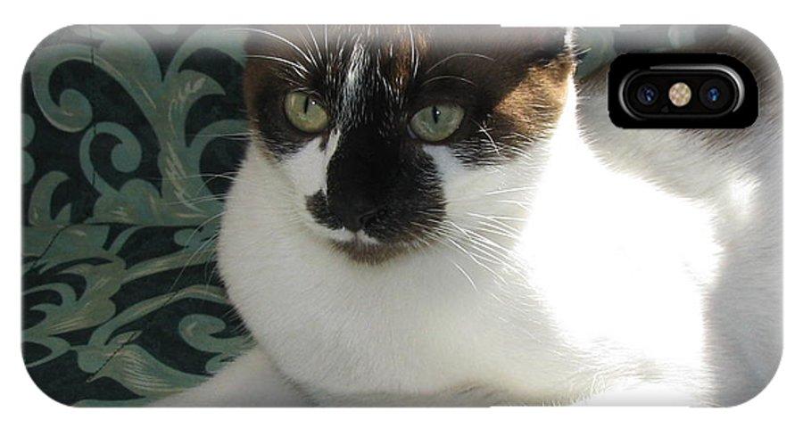 Kitten IPhone X Case featuring the photograph Silktapestrycatstm by Pamela Benham