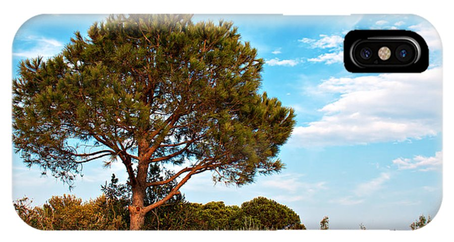 Single IPhone X Case featuring the photograph Single Pine Tree Against Blue Autumn Sky by Ken Biggs