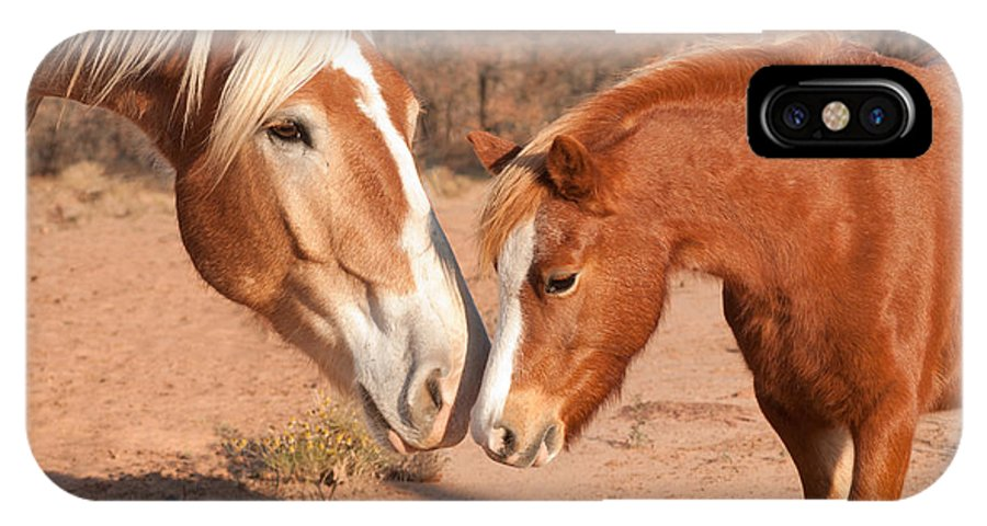 Belgian Draft IPhone X Case featuring the photograph Sniffing Noses by Sari ONeal