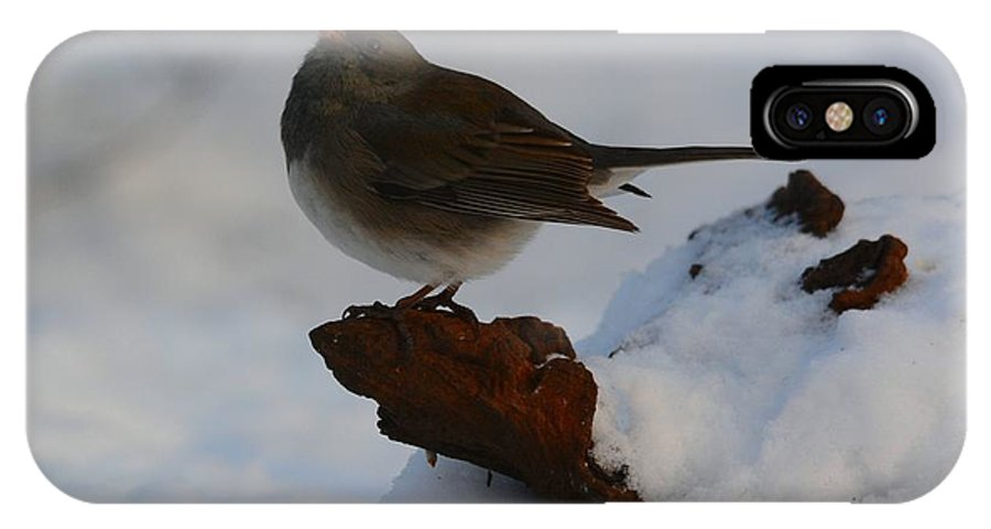 Bird IPhone X Case featuring the photograph Snowbird by Charles Owens