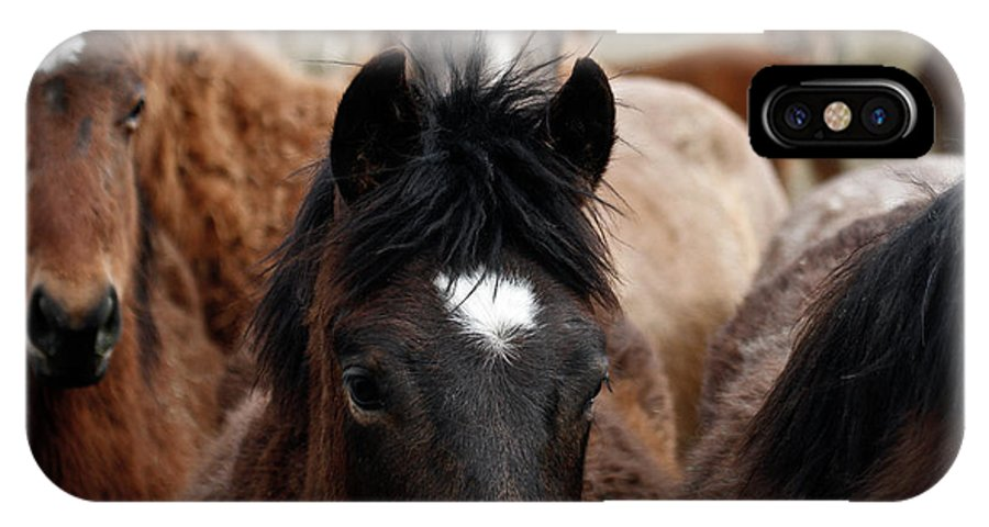 Wild Horses IPhone X Case featuring the photograph Stampede by Steve McKinzie