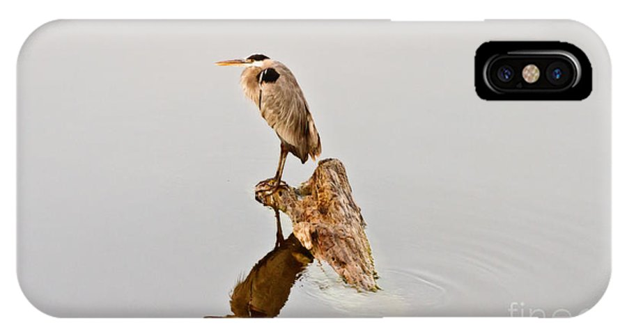 Great Blue Heron IPhone X Case featuring the photograph Still Hunter by Scott Pellegrin