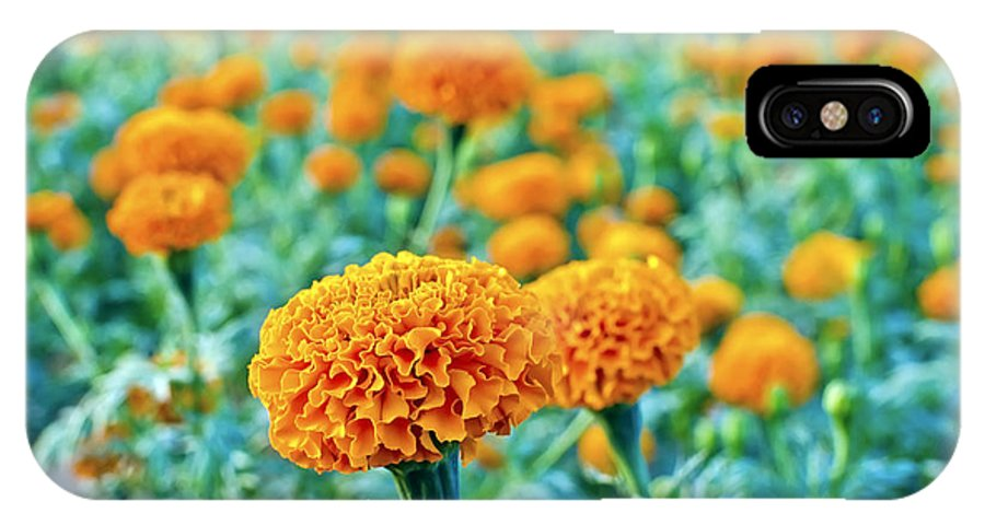 Tagetes Erecta IPhone X Case featuring the photograph Tagetes Erecta / Aztec Marigold Flower by Image World