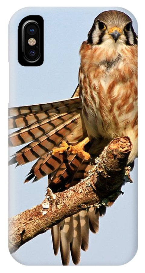 Falcon IPhone X Case featuring the photograph The Model by Ira Runyan