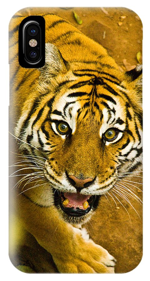 Tiger Photographs IPhone X Case featuring the photograph Tiger Stare II by Vernis Maxwell