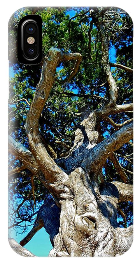 Tree IPhone X Case featuring the photograph Tree Climbing Paradise by Kimberly Dawn Clayton