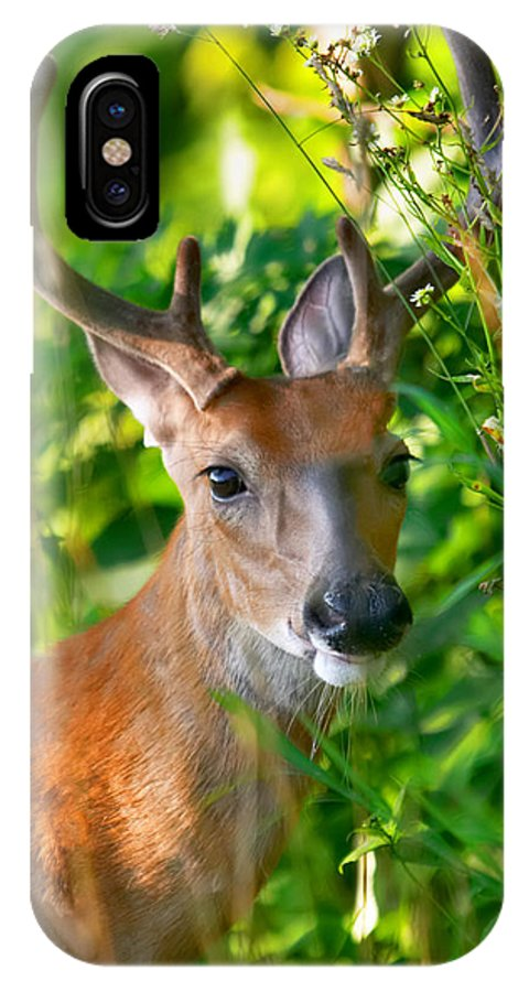 Buck IPhone X Case featuring the photograph Trophy Buck In Velvet by Mary Almond