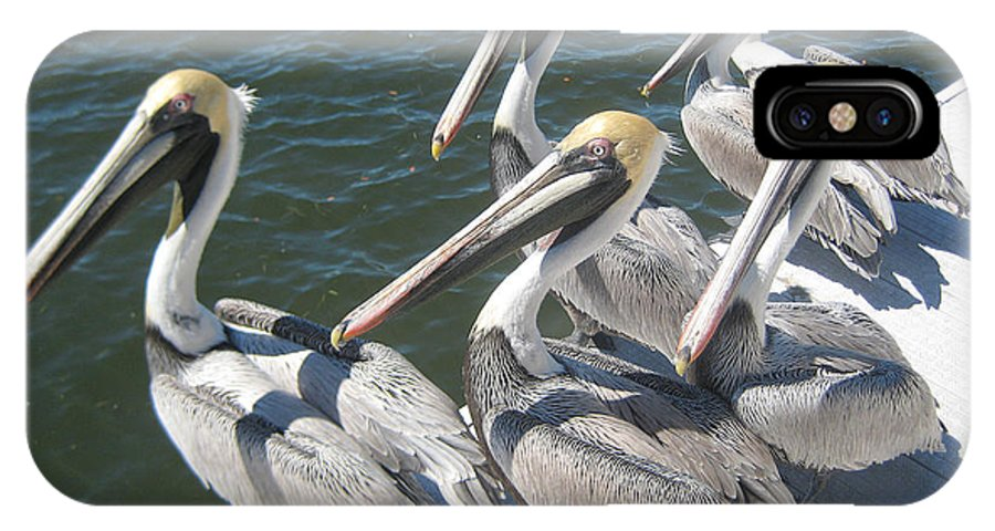 Pelicans IPhone X Case featuring the photograph Waiting For Dinner by John Black