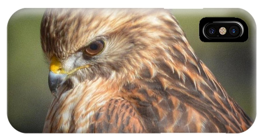 Red Tail Hawk IPhone X Case featuring the photograph Watchful Eye by Nancy Koehler