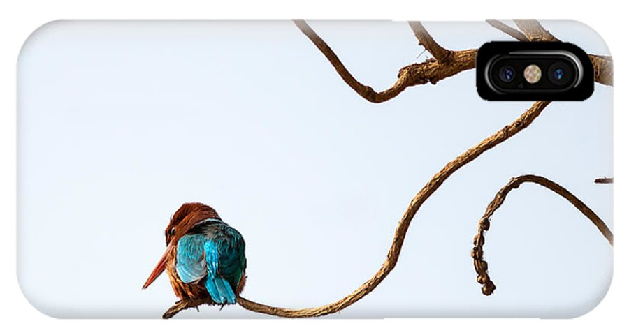 Smyrna Kingfisher IPhone X Case featuring the photograph White-throated Kingfisher by Gaurav Singh