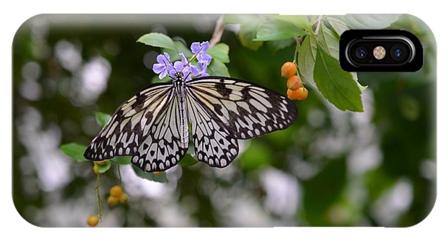 Butterfly IPhone X Case featuring the photograph Wings Of Beauty by Chandra Wesson