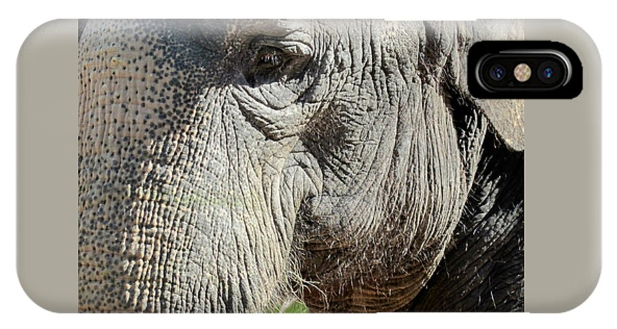 Elephant IPhone X Case featuring the photograph Wise One,elephant by Sandra Reeves