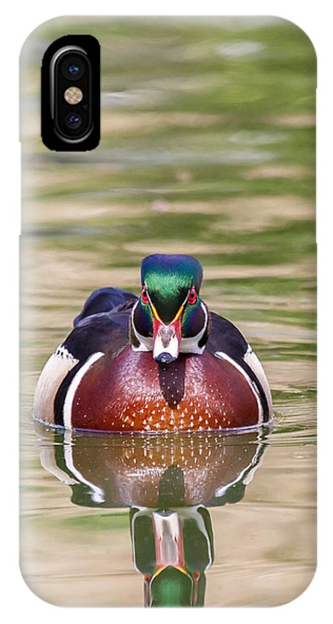 Wood Duck IPhone X Case featuring the photograph Wood Duck Drake by Leslie Morris