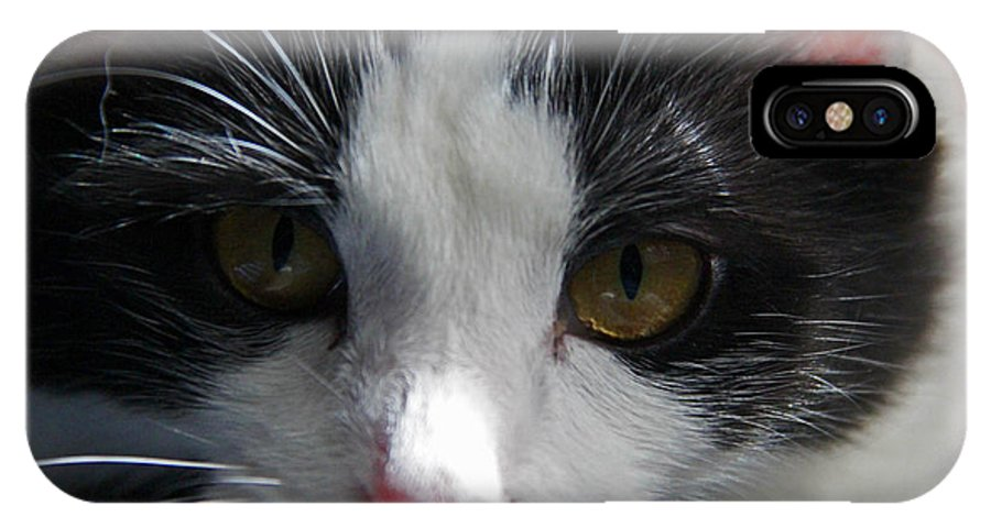 Cat IPhone X Case featuring the photograph Yue Up Close by Andy Lawless