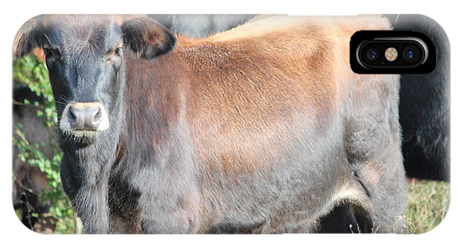 Cow IPhone X Case featuring the photograph 11282013017 by Debbie L Foreman