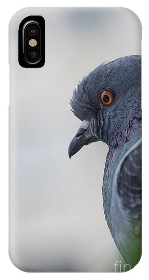 Birds IPhone X Case featuring the photograph Rock Dove by Jivko Nakev