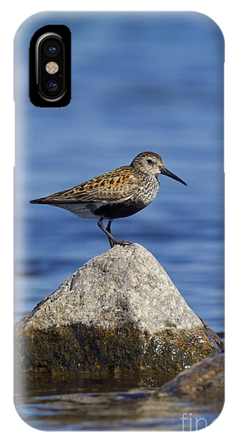 Calidris Alpina IPhone X Case featuring the photograph 121213p019 by Arterra Picture Library