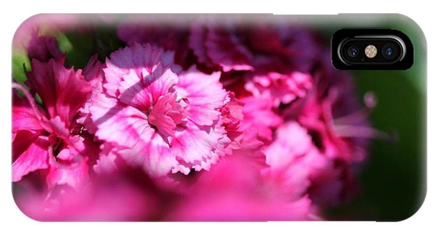 Mccombie IPhone X / XS Case featuring the photograph Sweet William From The Super Duplex Bluepoint Mix by J McCombie