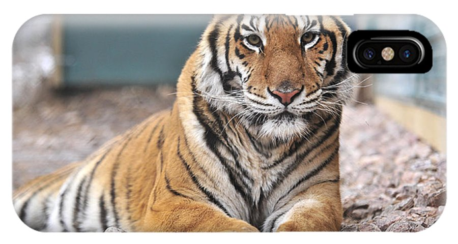 Tiger IPhone X Case featuring the photograph Untitled by Joe Rogers