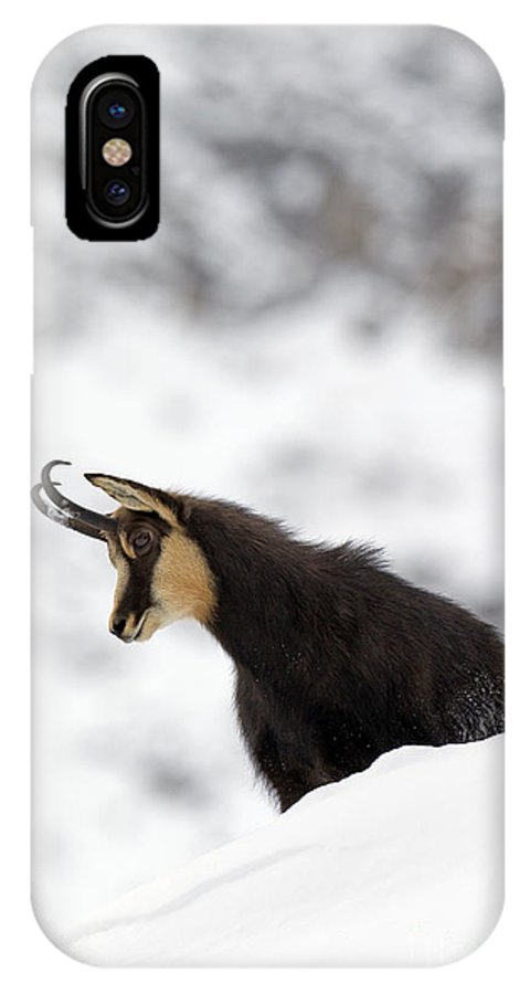Chamois IPhone X Case featuring the photograph 130201p229 by Arterra Picture Library