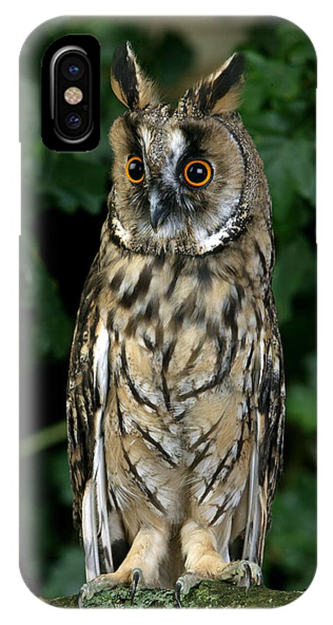 Adult IPhone X Case featuring the photograph Hibou Moyen Duc Asio Otus by Gerard Lacz