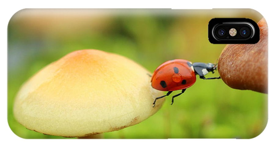 Ladybug IPhone X Case featuring the photograph Ladybug by Heike Hultsch