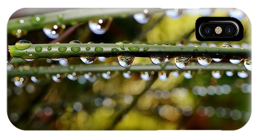 Bamboo Grass; Rain; Drops; Garden; Macro; Nature; Wet; Water; Green; Brown; Plant; Background; Spring; Reflection; Droplets; IPhone X Case featuring the photograph Raindrops On Bamboo Grass by Werner Lehmann