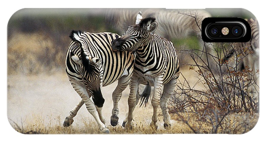Adult IPhone X Case featuring the photograph Zebre De Burchell Equus Burchelli by Gerard Lacz