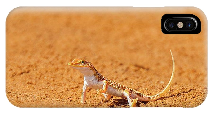 Adventure IPhone X Case featuring the photograph African Reptiles by Shannon Benson