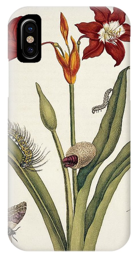 Amaryllis IPhone X Case featuring the photograph Insects Of Surinam by Natural History Museum, London/science Photo Library