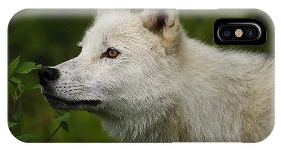Arctic Wolf Photography IPhone X Case featuring the photograph Arctic Wolf by Wolves Only