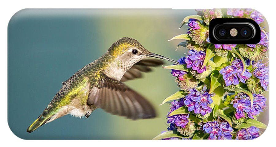 Hummingbird IPhone X Case featuring the photograph Hummingbird In Flight by Pierre Leclerc Photography
