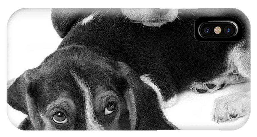 Photography IPhone X Case featuring the photograph 1960s Two Adorable Sad Eyed Beagle by Vintage Images