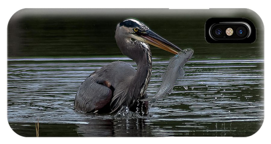 Great Blue Heron IPhone X Case featuring the photograph A Nice Catch by Charles Moore