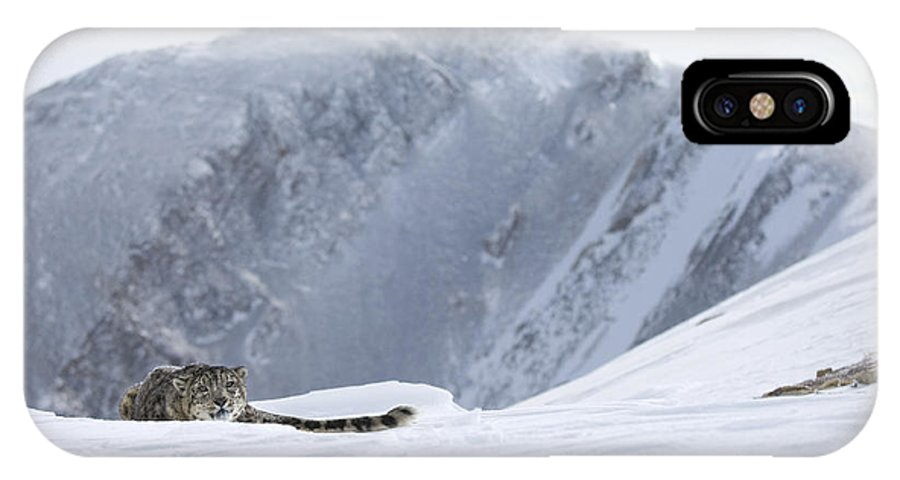 Snow Leopard IPhone X Case featuring the photograph Absolute Solitude by Wildlife Fine Art