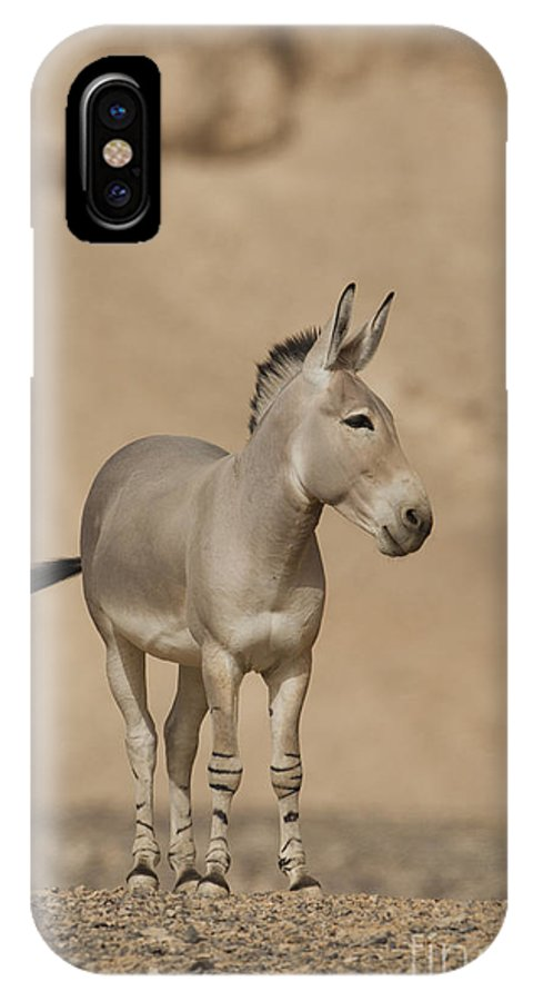 African Wild Ass IPhone X Case featuring the photograph African Wild Ass Equus Africanus by Eyal Bartov