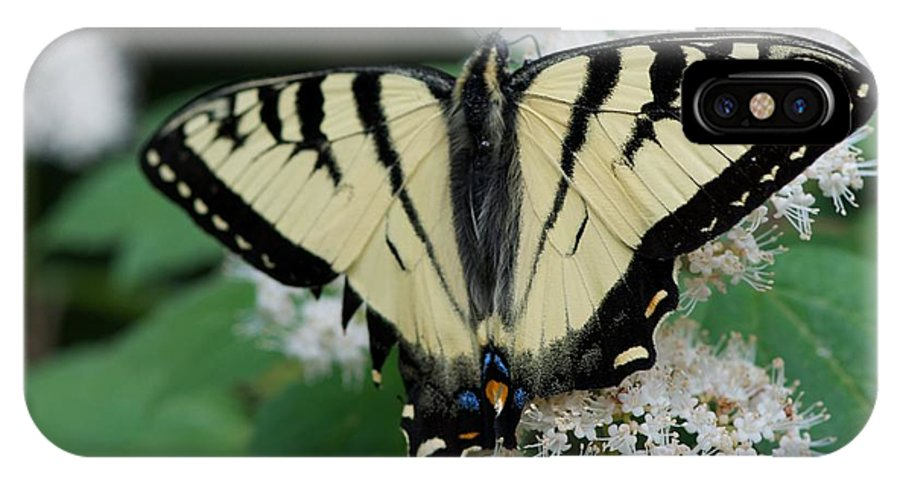 Butterflies IPhone X Case featuring the photograph Afternoon by Joseph Yarbrough