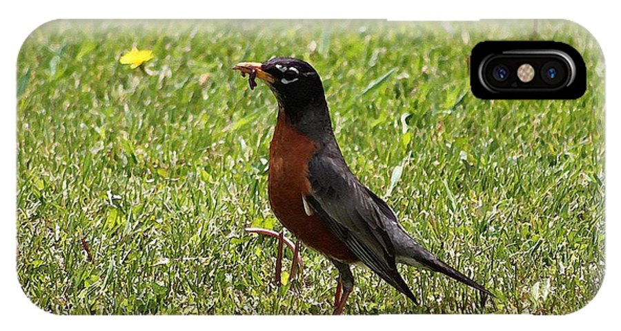Mccombie IPhone X Case featuring the painting American Robin Gathering Worms by J McCombie