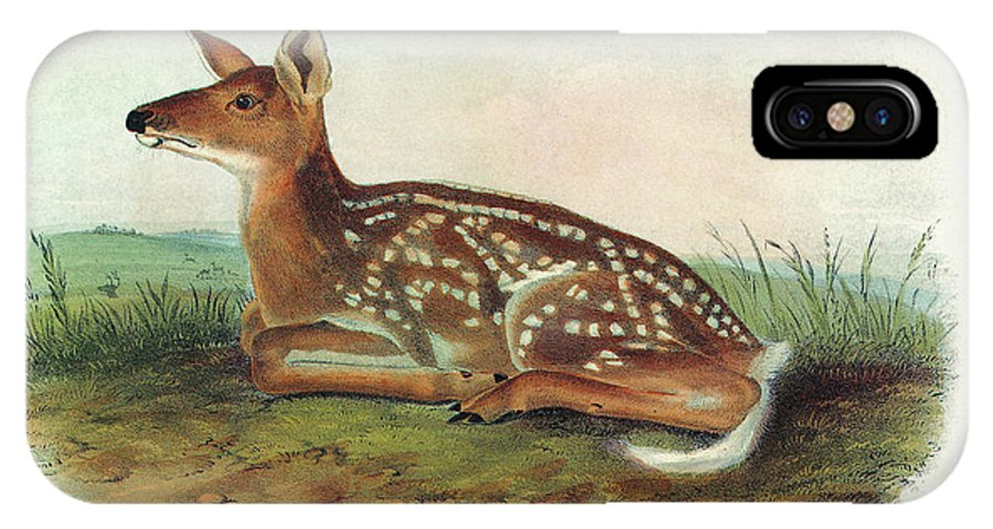 1851 IPhone X Case featuring the painting Audubon Deer by Granger