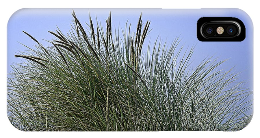 Beach IPhone X Case featuring the photograph Beach Grass by Betty Depee