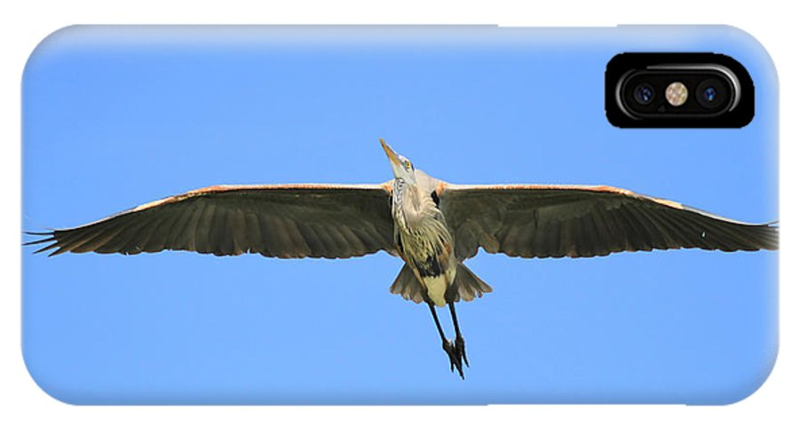Blue Heron IPhone X / XS Case featuring the photograph Beauty Of Flight by Deborah Benoit