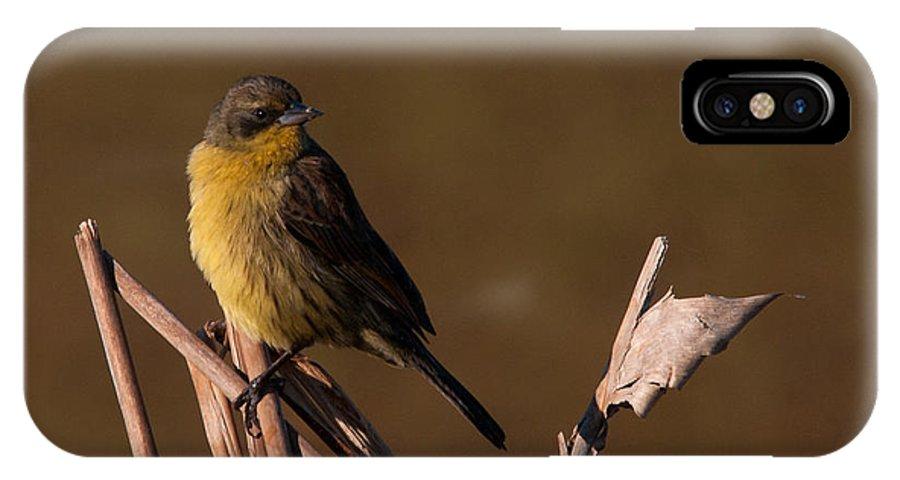 Bird IPhone X Case featuring the photograph Bird by Carlos V Bidart