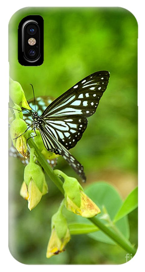 Butterfly IPhone X Case featuring the photograph Blue Butterflies In The Green Garden by Gina Koch