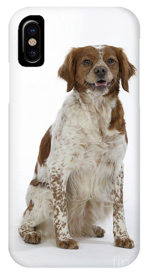 Brittany Spaniel IPhone X / XS Case featuring the photograph Brittany Spaniel Or Epagneul Breton by John Daniels