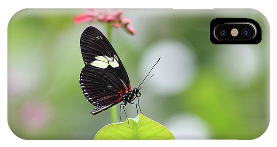 Butterfly IPhone X Case featuring the photograph Butterfly by Karla Corbin