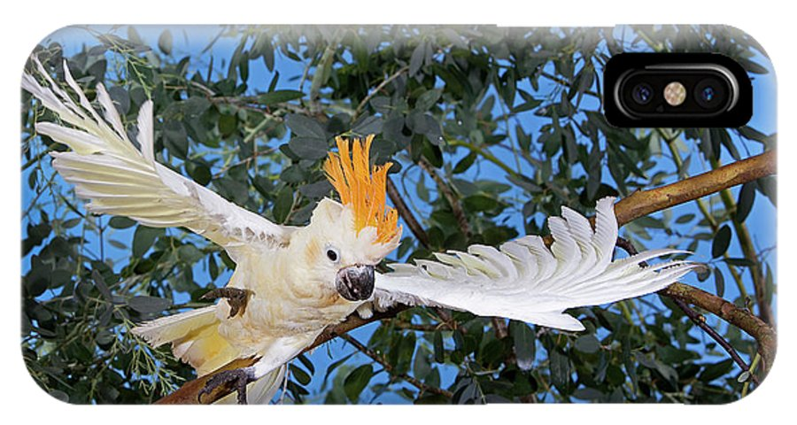 Adult IPhone X Case featuring the photograph Cacatoes A Huppe Orange Cacatua by Gerard Lacz