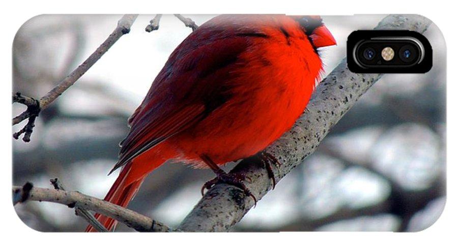 Cardinal IPhone X Case featuring the photograph Cardinal by Emily Rahman