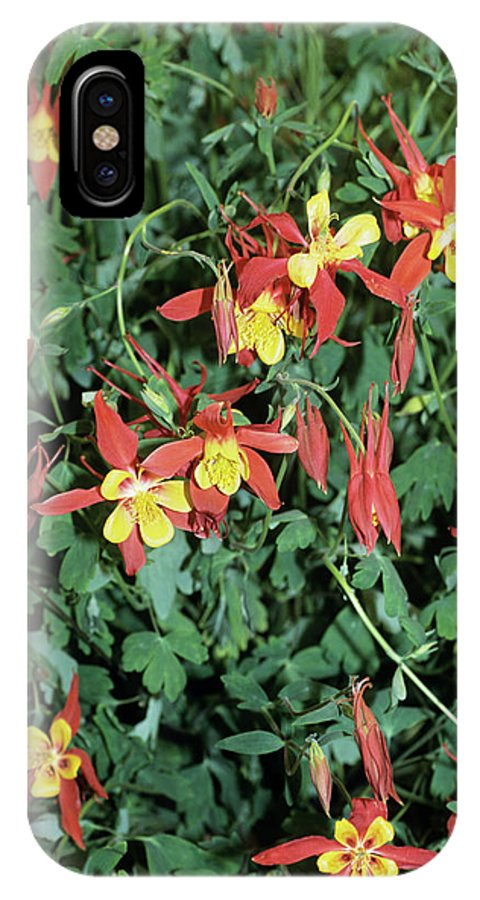 Aquilegia 'kansas' IPhone X Case featuring the photograph Columbine by Adrian Thomas/science Photo Library