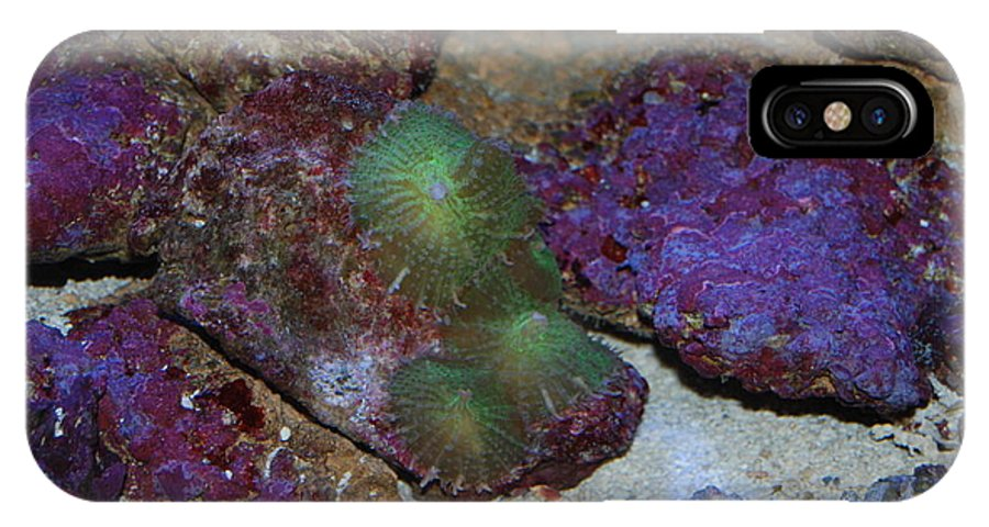 Taken Through Side Of Aquarium IPhone X Case featuring the photograph Coral by Robert Floyd