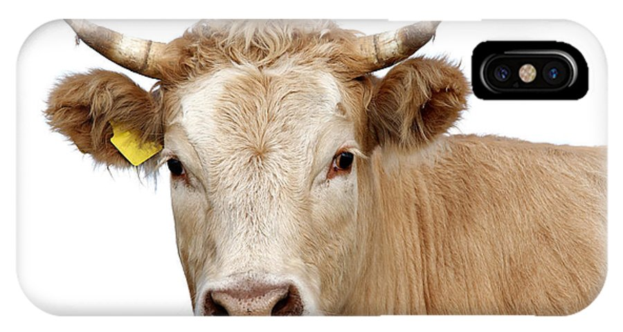 Cow IPhone X Case featuring the photograph Detail Of Cow Head by Michal Boubin